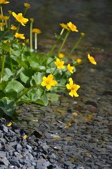 Water, Water Running, Landscape, Flowers, Trickle
