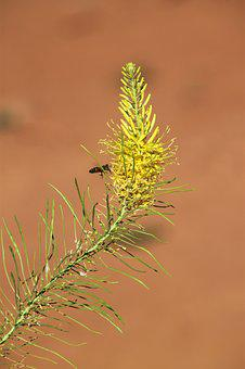 Arches, Bees, Natural, Flora, Plant, Yellow