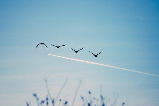 Birds, Sky, Flying, Nature, Blue, Flight, Wildlife