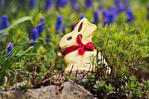 Easter, Lindt, Gold Bunny, Nature, Chocolate