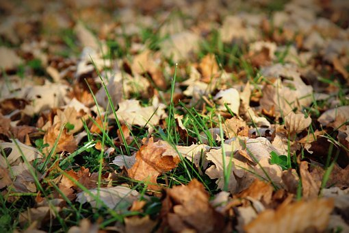 Leaves, Fall, Dead, Fall Leaves, Autumn