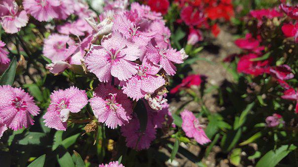 Flowers, Nature, Pink, Floral, Plant, Blooming