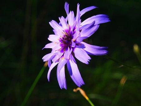 Flower, Purple, Purple Flower, Purple Flowers, Nature