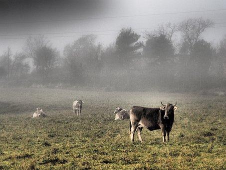 Landscape, Cow, Nature, Farm, Field, Rural, Agriculture
