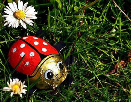 Lucky Ladybug, Ladybug, Chocolate, Lucky Charm, Luck