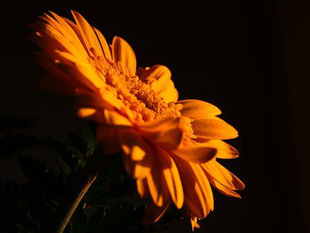 Flower, Yellow, Nature, Yellow Flowers, Floral, Natural