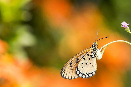 Butterfly, Macro, Insect, Nature, Animal, Yellow