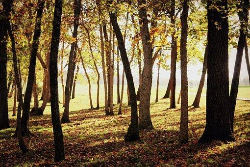 Forest, Fall, Autumn, Nature, Landscape, Orange