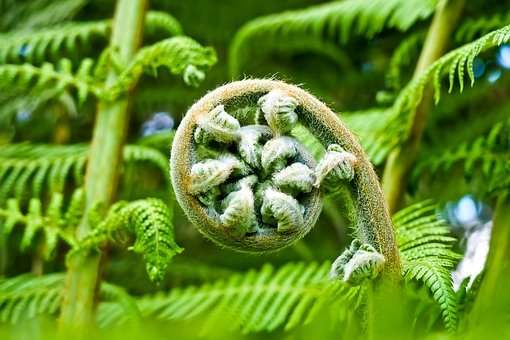 Palm Fern, Fern, Flora, Botanical Garden, Yellow Green