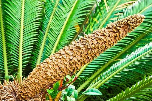 Palm Fern, Fern, Seeds Was, Flora, Botanical Garden