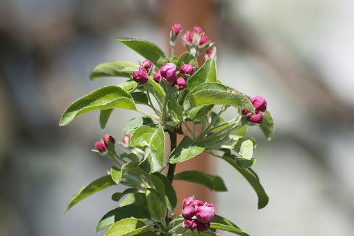 Blossom, Bloom, Pink, Close, Pink Flowers, Spring