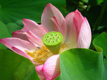 Floral, Plant, Pink, Blossom