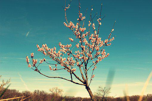 Tree, Blossom, Buds, Spring, Nature, Branch, Flower
