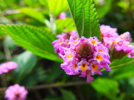 Flower, Plant, Nature, Spring, Summer, Floral, Leaf