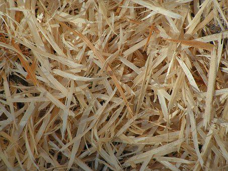 Wood, Shavings, Pine, Background, Texture