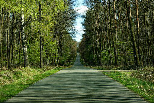 Tree, Forest, Landscape, Travel, Way, Outdoor, Happy