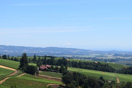 Wine, Vineyard, Landscape, Oregon, Summer, Sky, Rural