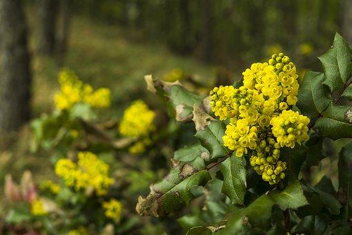 Yellow Flower, Yellow Flowers, Yellow, Blossom, Bloom