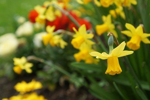 Flower, Yellow, Yellow Flower, Nature, Flowers