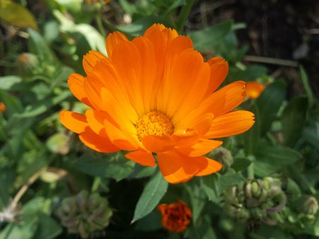Orange Flower, Petals Orange, Yellow Flower, Daisy