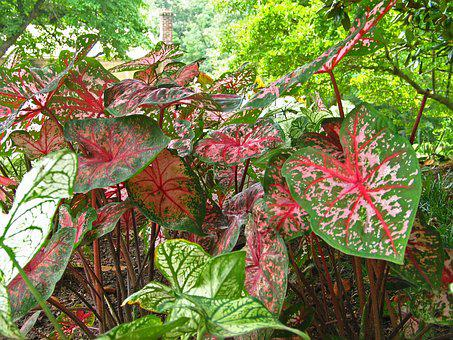 Foliage, Floral, Plant, Nature