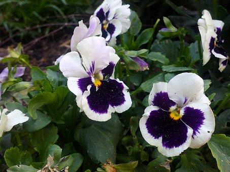 Purple Flower, White Flower, Garden, Flower