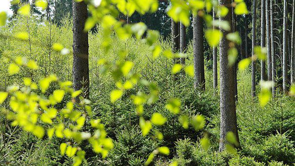 Forest, Trees, Nature, Spring, Light, Shadow, Green