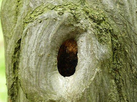 Tree, Bark, Moss, Fouling, Tribe, Green, Wood, Old Tree