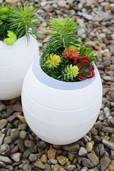 Stones, Plants, Funeral Urns, Trim, Leaves, Funeral
