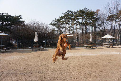 Jump To Introduction, Jumping Puppy