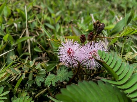 Flower, Leaf, Petels, Floral, Nature, Plant, Spring