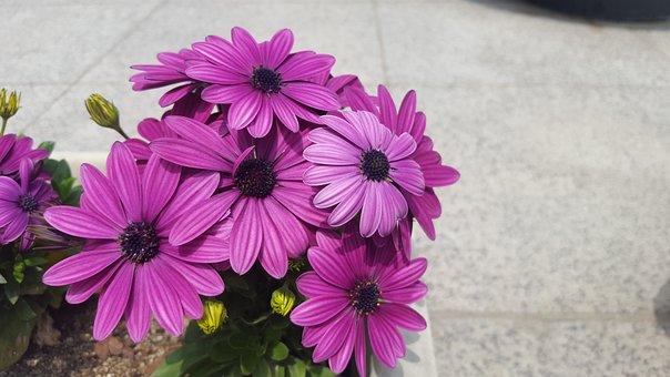 Flowers, Potted Plant, Purple, Plants, Mini Potted