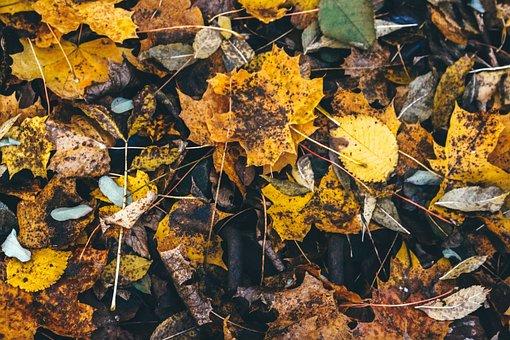 Autumn, Leaves, Nature, Golden Autumn, Fall Foliage