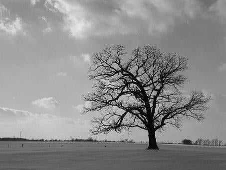 Tree, Field, Black, White, Lonely, Alone, One, Nature