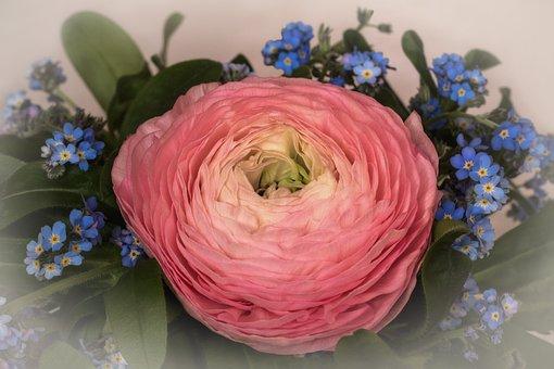 Spring, Flowers, Ranunculus, Forget Me Not