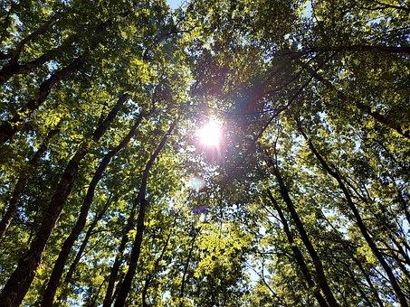 Sun, Trees, Nature, Ray, Leaves, Sky, Green, Tree
