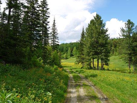 Landscape, Summer, Road
