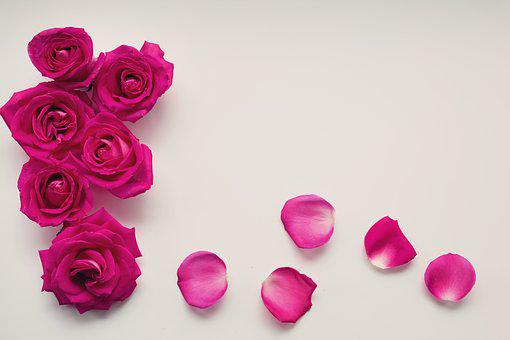 Roses, Petals, Background, Text Background, Text Space