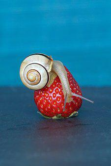 Strawberry, Snail, Shell, Probe, Mollusk, Slowly