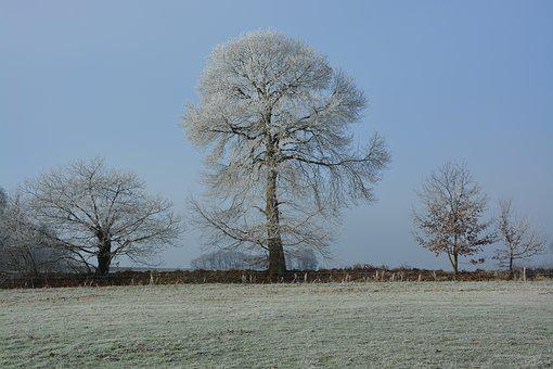 Tree, Frost, Nature, Cold, Winter, Field, Ice
