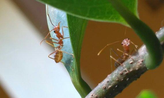 Leaf, Twig, Panorama, Photography, Macro, Ants, Drama
