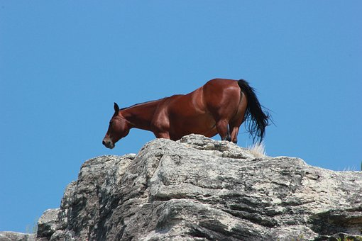 Horse, Animal, Breed, Farm, Mammal, Stallion