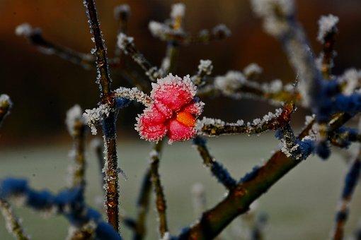 Flowers, Brina, Winter, Plant