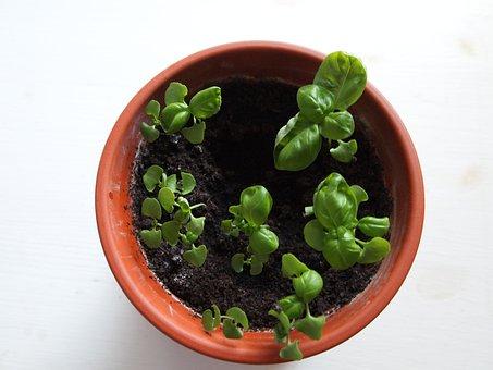 Grow, Plants, Home, Green, Gardening, Fresh, Nature
