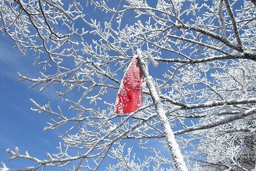 Winter, Snow Mountain, Jeju Island, Republic Of Korea