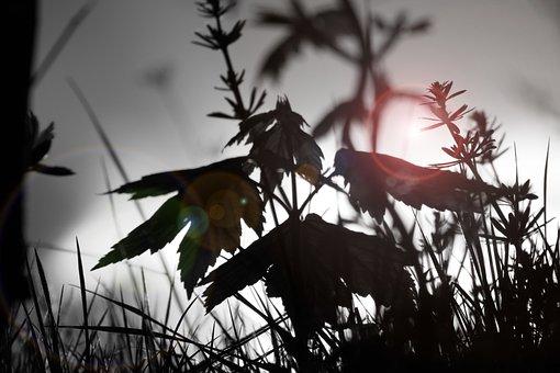 Nature, Nature Conservation, Spring, Landscape, Plant