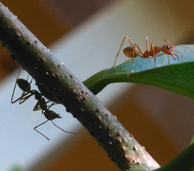 Photography, Macro, Ants