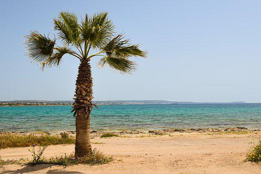Cyprus, Potamos Liopetri, Palm Tree, Beach, Sea