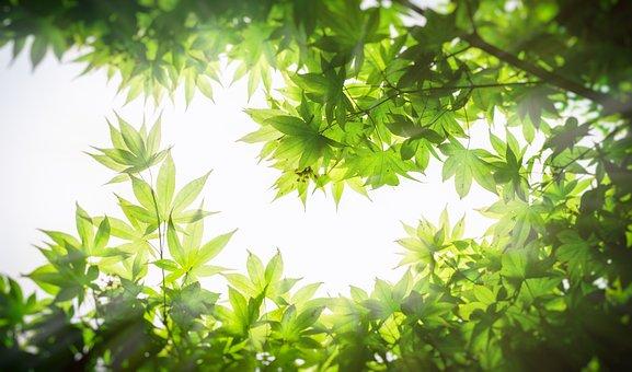 Maple, Wood, The Leaves, Twig, Leaf, Texture, Pattern