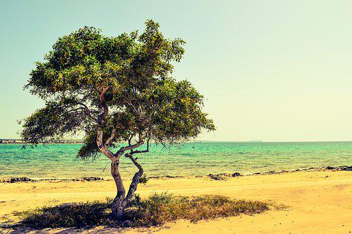 Cyprus, Potamos Liopetri, Tree, Beach, Sea, Landscape
